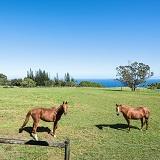 乗馬を楽しめる牧場付きの物件の画像